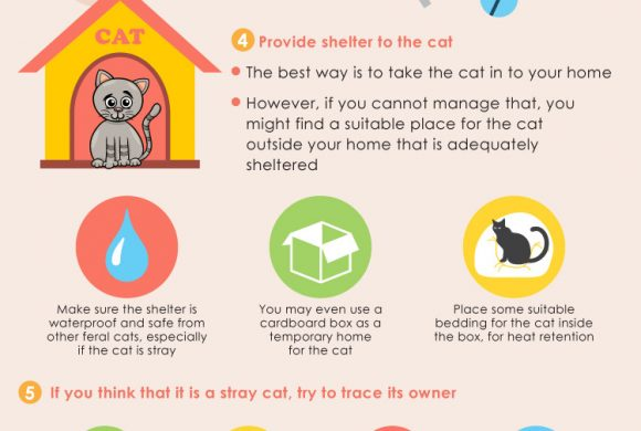 Stray or Feral Cat
