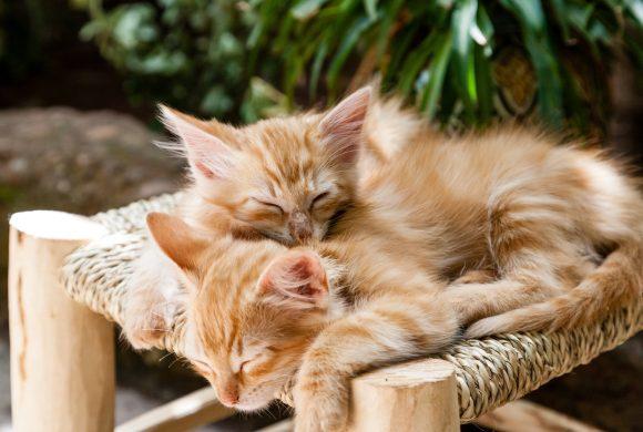 Internet Pet Resources